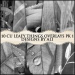 CU Leafy Things Overlays TS Pk 1